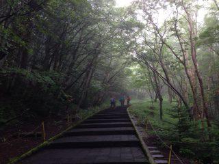 樹林帯 須走口