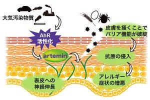 皮膚のバリア破壊 抗原が侵入