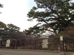 兵庫県西宮市 桜の名所 夙川